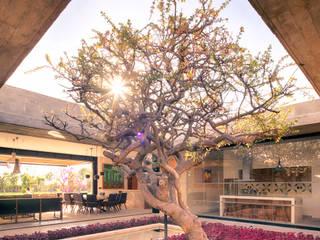 Modern Garden by Taller Tlaiye Modern