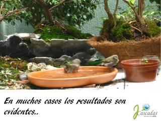 PRESENTACIÓN JCASCADAS JardínJarrones y macetas