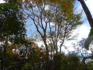 雑木のお手入れ(自然樹形剪定) の 庭や煌久