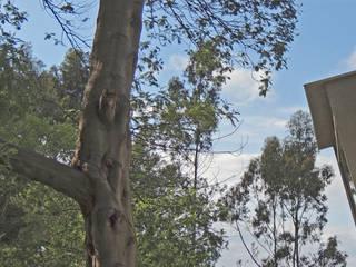Casa mirando a los árboles MG arquitectos Casas de estilo minimalista