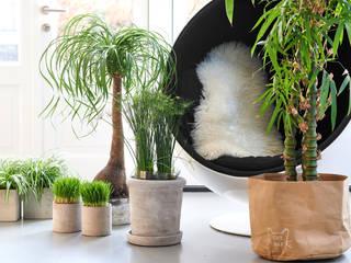 Pflanzenfreude.de Living roomSide tables & trays