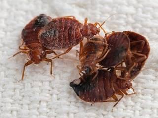 Pest Control Pros (Pty) Ltd:   by Pest Control Pros (Pty) Ltd
