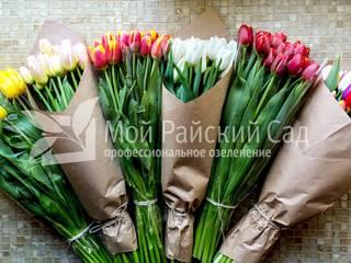 Выращивание тюльпанов от EcoWall.pro Классический