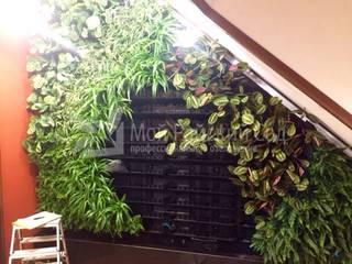 Озеленение частного дома от EcoWall.pro Тропический