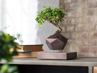 Левитирующее растение Бонсай:  в . Автор – Levitera