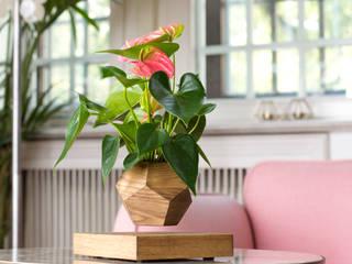 Левитирующее растение Антуриум:  в . Автор – Levitera