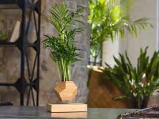 Левитирующее растение Хамедорея:  в . Автор – Levitera