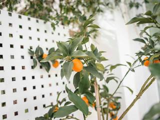 Jardín: Jardines delanteros de estilo  de CISOYER