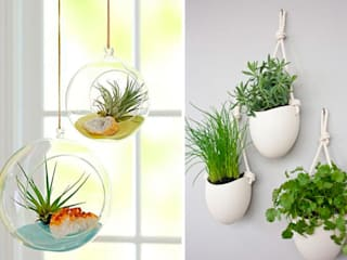 Ideas para decorar con plantas Paredes y suelos de estilo moderno de Decopot.es Moderno