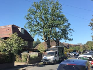 Oak Tree Pruning in Raynes Park の GraftinGardeners Ltd