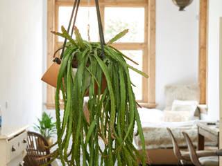 Pflanzenfreude.de BedroomAccessories & decoration