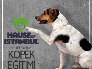 par Köpek Eğitimi İstanbul
