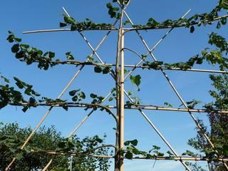 Leibomen voor meer prive in de tuin:   door onlinegroen