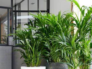 Pflanzenfreude.de의 현대 , 모던