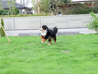 愛犬のための広い芝庭と駐車場 モダンな庭 の 富士西麓ガーデン モダン