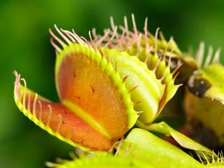 Pflanzen:   von GartenXXL (NeS Gmbh)