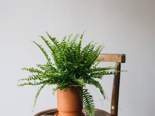 تنفيذ Pflanzenfreude.de