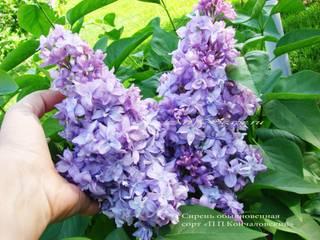 Цветы, озеленение.:  в . Автор – ArtScape,