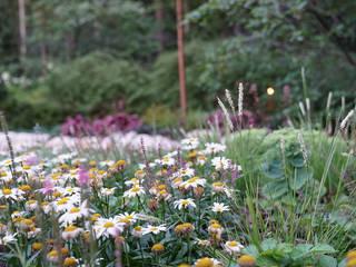 Jardines de estilo rústico de ARCADIA GARDEN Landscape Studio Rústico