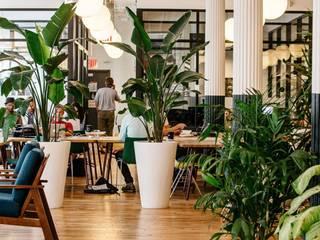 Entornos Corporativos de Bienestar Estudios y despachos de estilo minimalista de Simbiotia Minimalista
