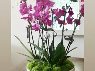 Bombona XL de Casa de Palo Ceramicas Moderno
