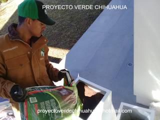 DISEÑO VERDE DE INTERIOR de PROYECTO VERDE CHIHUAHUA Minimalista