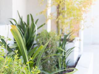Jardines de estilo  de Estudio Amani, Minimalista