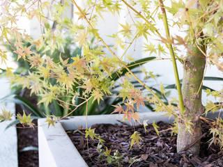 Garden by Estudio Amani, Minimalist