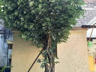 Arbol artificial ya listo con follaje de ficus Hoteles de estilo tropical de Inova Decora Plantas Artificiales Tropical Madera Acabado en madera