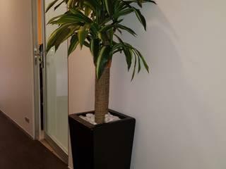 Maceta de fibra de vidrio decorada con planta artificial PALO DE BRASIL y piedra decorativa de Inova Decora Plantas Artificiales Moderno Seda Amarillo