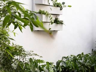 前院 by Plantesdecor, 熱帶風