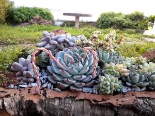 Decoração de jardim / Centro de mesa por Suculentas.design Rústico