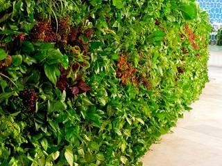 VERTIJARDIN Minimalist style garden