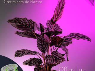 LAMPARAS LED PAR 38 CRECIMIENTO PLANTAS:  de estilo  por OFFICE LUZ  ILUMINACION