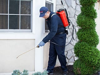 Pest Control Services in Bangalore by techsquadteam
