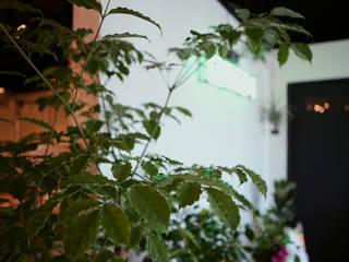 돌탑갈비 100평형 인테리어 모던스타일 벽지 & 바닥 by 주식회사 큰깃 모던