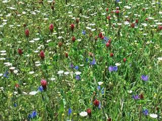 Reposição de coberto vegetal: Espaços comerciais  por Greenchallenge,