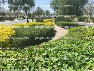 Mantenimiento Integral y riego de jardines fraccionamiento El Mayorazgo 2010 al dia de hoy Paisajismo de Alto Nivel Centros comerciales de estilo moderno