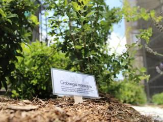 Vườn phong cách Địa Trung Hải bởi P432 studio Địa Trung Hải