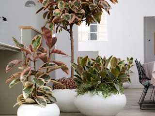 Pflanzenfreude.de Living roomAccessories & decoration
