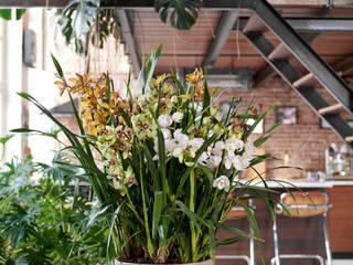 Pflanzenfreude.de Interior landscaping Hemp/Jute Multicolored