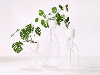 Monstera Magnifica & Monstera Fugiens van Tim van de Weerd