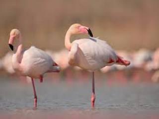Flamingos od EVOLUXURY DESIGN