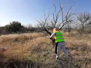 Reforestación de CACTI GARDEN