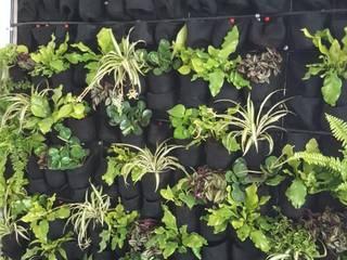Muro verde Interior de IMPERATOR Tropical