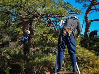 Élagage d'arbres à Bois-Le-Roi Jardin classique par Elagage Villiers Elagueur Bois-le-Roi 77 Classique