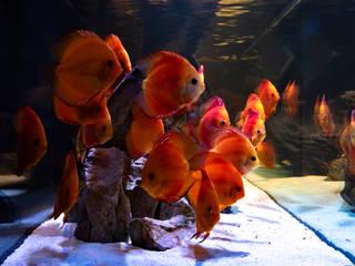 Acquario a parete di MELIK LUXURY Aquarium Moderno