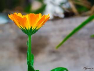Flores para estimular las emociones de Roberto Doger Fotografía