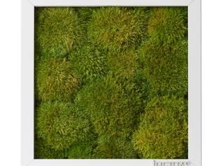 Solmayan Yosun Tablo Ball Moss silvanus dikey bahçeler