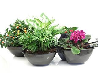 Yaşam Çiçeği Duvar Saksı Kiti silvanus dikey bahçeler